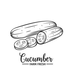 Hand drawn cucumber icon vector