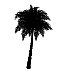 Palm tree silhouette3 vector