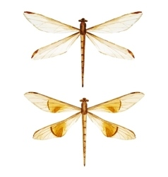 Watercolor dragonflies vector