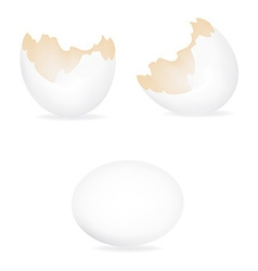 White eggs vector