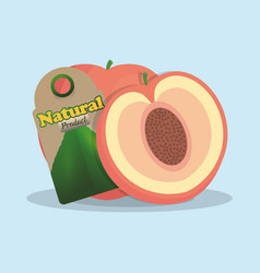 apricot natural product tag market vector image