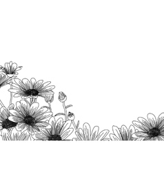 Chamomile hand drawn flowers background isolated vector image