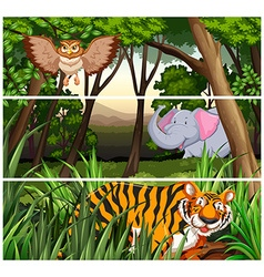Wildlife in the jungle vector image