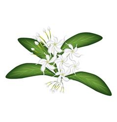Cape jasmine on tree vector