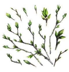 Watercolor spring branches vector