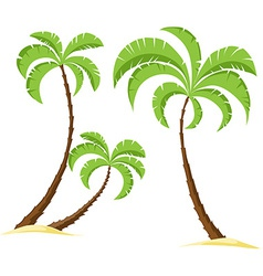 Palm tree isolated on white background - vector