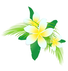 Frangipani tropic flowers vector