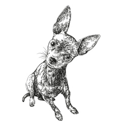 Dog russian toy terrier hand drawn vector