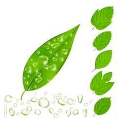 Fresh leaves with water drops set vector