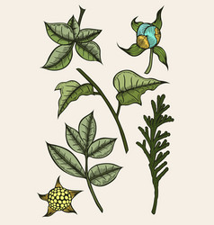 set of plants painted by hand vector image vector image