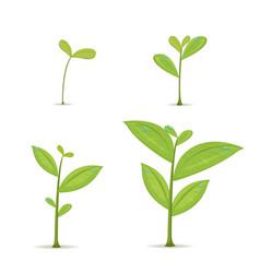 Plant green leaf grow set vector