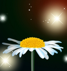 Flower chamomile vector