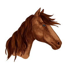 Horse animal brown stallion racehorse icon vector