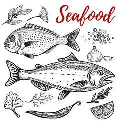 set of hand drawn seafood isolated on white vector image