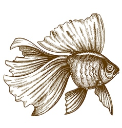 Engraving gold fish vector