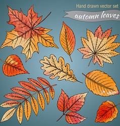 Botanical set highly detailed hand drawn leaves vector