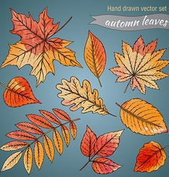 Botanical set highly detailed hand drawn leaves vector image vector image