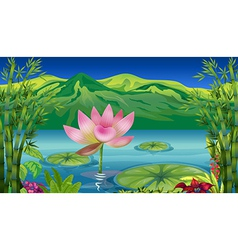 Cartoon Lotus Flower vector image vector image