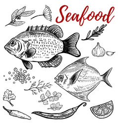 Seafood fish with spices design elements for vector