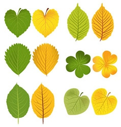 Autumn leaves green and yellow vector