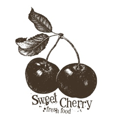 Cherry logo design template fruit or fresh vector