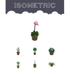 Isometric flower set of plant flowerpot grower vector