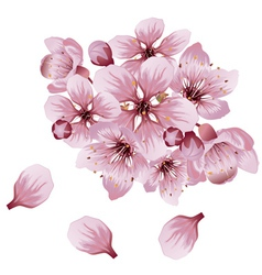 Soft Pink Sakura Flowers vector image vector image