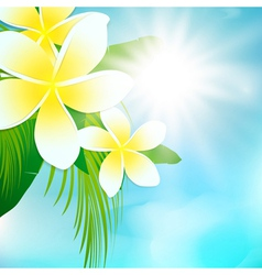 Palm leaves and frangipani flowers vector