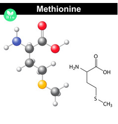 Methionine proteinogenic essential amino acid vector