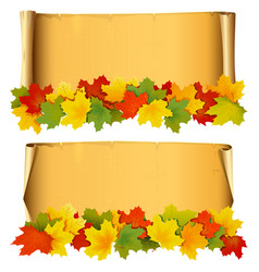 Scroll with autumn leaves vector