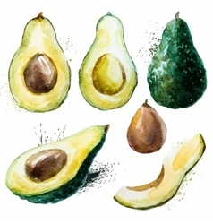 Watercolor avocado set vector