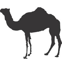 Camel clipart design design vector