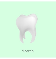 Tooth for registration of dentistry vector image vector image