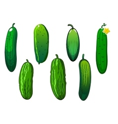 Fresh prickly green cucumber vegetables vector