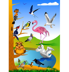 beautiful birds in nature vector image vector image