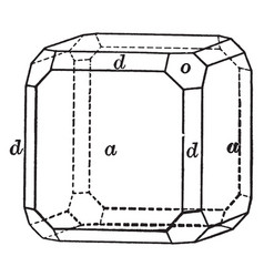 Cube octahedron and dodecahedron vintage vector