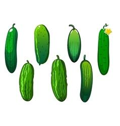 Fresh prickly green cucumber vegetables vector