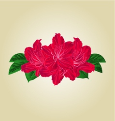 Festive bouquet red rhododendrons vector