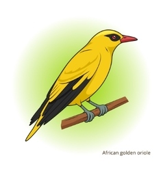 African golden oriole bird educational game vector