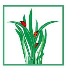 Ladybug on grass in square card vector