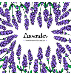 lavender drawing frame isolated wild vector image vector image