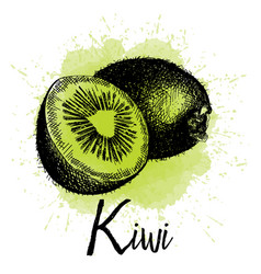 kiwi in hand drawn graphics vector image