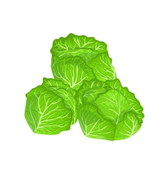 Cabbages vector