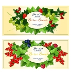 Healthy fruits and berries banners set vector image