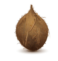 Brown shaggy coconut stands upright vector