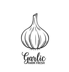 Hand drawn garlic icon vector