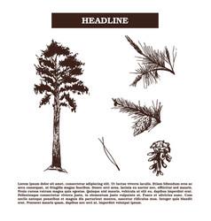 Vintage engraving pine-tree vector