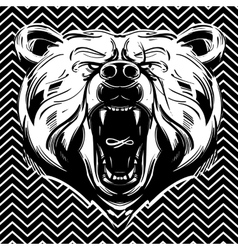 Bear face vector image