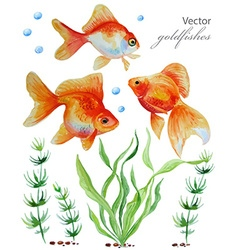 Watercolor collection of hand drawn goldfishes vector