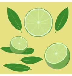 Lime and leaves vector